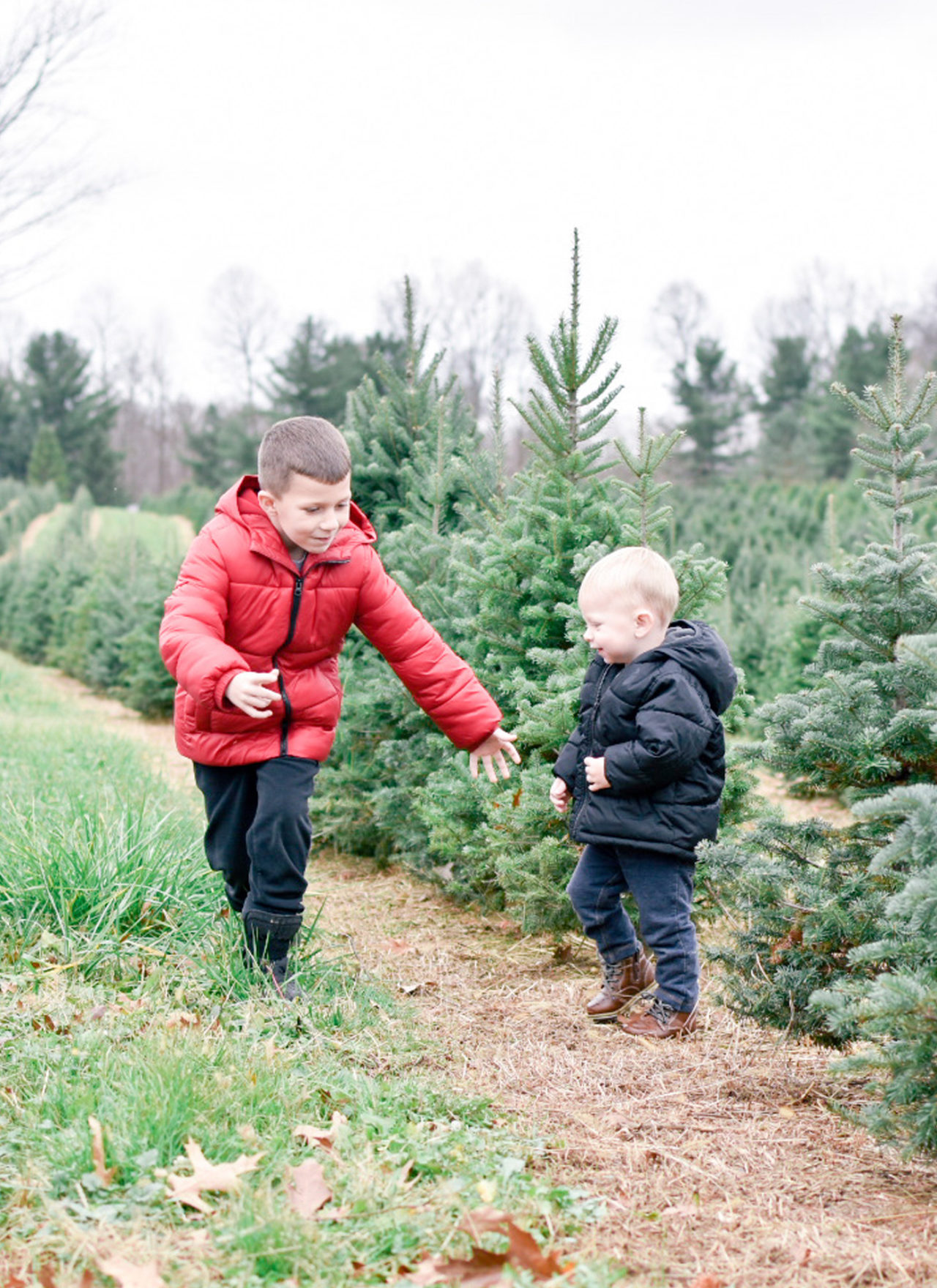 Christmas Tree Search at Timbuk Farms