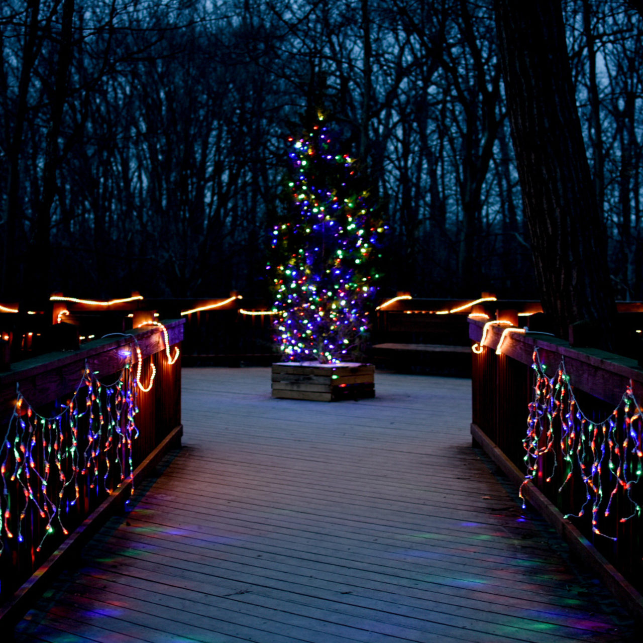 Holiday Lights at Highbanks Metro Park